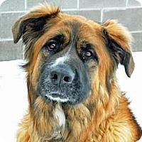 Adopt A Pet :: Cayce - Cheyenne, WY
