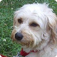 Adopt A Pet :: Benji - Brattleboro, VT