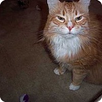Adopt A Pet :: Charlie - Laguna Woods, CA