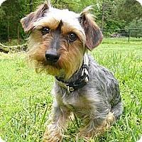 Adopt A Pet :: Riggs - Mocksville, NC