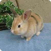 Adopt A Pet :: baby 1 - Bonita, CA