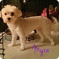 Adopt A Pet :: Myra - House Springs, MO