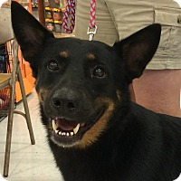 Adopt A Pet :: Shelly-Referral - Dripping Springs, TX
