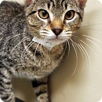 Adopt A Pet :: Hercules - Channahon, IL