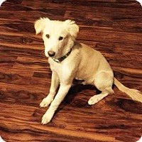 Adopt A Pet :: Rowen - West Hartford, CT