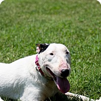 Adopt A Pet :: Ellie - New York, NY