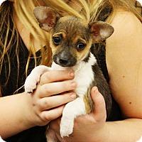 Adopt A Pet :: Serina - Rancho Cucamonga, CA