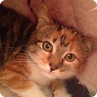 Adopt A Pet :: Sake - Gainesville, FL