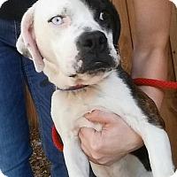 Adopt A Pet :: Sparky - Gainesville, FL