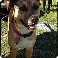Adopt A Pet :: Sasha - Johnson City, TX