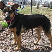 Adopt A Pet :: Jane - Bedminster, NJ