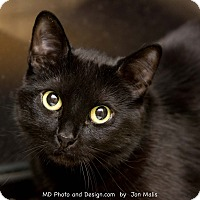 Adopt A Pet :: Reilly - Fountain Hills, AZ