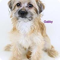 Adopt A Pet :: Gabby - Bloomington, MN