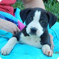 Adopt A Pet :: Koda (7 lb) Video! - SUSSEX, NJ