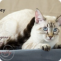 Adopt A Pet :: Joey - Oklahoma City, OK