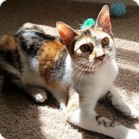 Adopt A Pet :: JoJo - Houston, TX