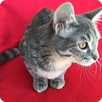 Adopt A Pet :: Skye - Meridian, ID