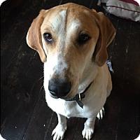 Adopt A Pet :: Ru - Florence, KY