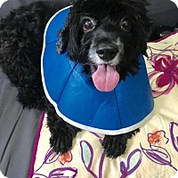 Adopt A Pet :: Tango - Flushing, NY