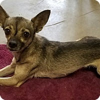 Adopt A Pet :: Allie - Monrovia, CA