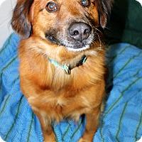 Adopt A Pet :: Rupert - Melbourne, KY