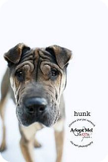 Shar Pei Mix Dog for adoption in Mira Loma, California - Hunk