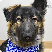 Adopt A Pet :: Holly - Dublin, CA