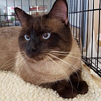 Adopt A Pet :: Earl 1408 - Alva, OK