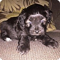 Adopt A Pet :: Jett (M) - Santa Ana, CA