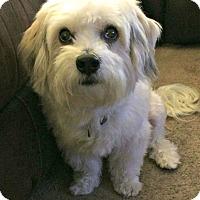 Adopt A Pet :: Ryan - Redondo Beach, CA