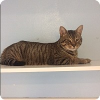 Adopt A Pet :: Harrison - Port Clinton, OH