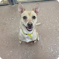 Adopt A Pet :: Lily *Petsmart GB* - Appleton, WI