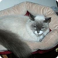 Adopt A Pet :: Melody - Santa Rosa, CA