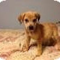 Adopt A Pet :: Baby Waffle - Marlton, NJ