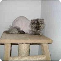 Adopt A Pet :: Pearl - Etobicoke, ON