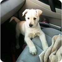 Adopt A Pet :: Caleb - Richmond, VA
