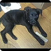 Adopt A Pet :: Tobias - Maryville, IL