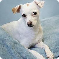 Adopt A Pet :: Roxanne - Phoenix, AZ