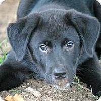 Adopt A Pet :: Apollo - Austin, TX