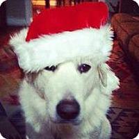 Adopt A Pet :: Acelin - Austin, TX