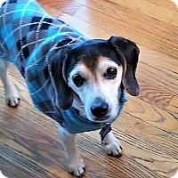 Adopt A Pet :: Lucki - Novi, MI
