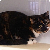 Adopt A Pet :: Izzee - Colmar, PA