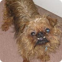 Adopt A Pet :: Annie - Jacksonville, FL