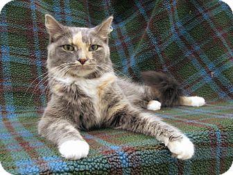 Domestic Mediumhair Cat for adoption in Redwood Falls, Minnesota - Serena