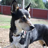 Adopt A Pet :: Gwendolyn - Calm companion - Bellflower, CA