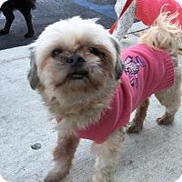 Adopt A Pet :: Reggie - Santa Ana, CA