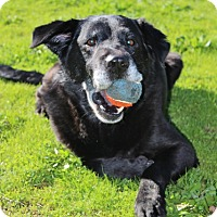 Adopt A Pet :: Midnight - Grants Pass, OR