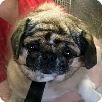 Adopt A Pet :: Buffy - Irmo, SC