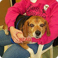 Adopt A Pet :: BEAU - Ventnor City, NJ
