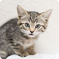Adopt A Pet :: Juliana - Fountain Hills, AZ